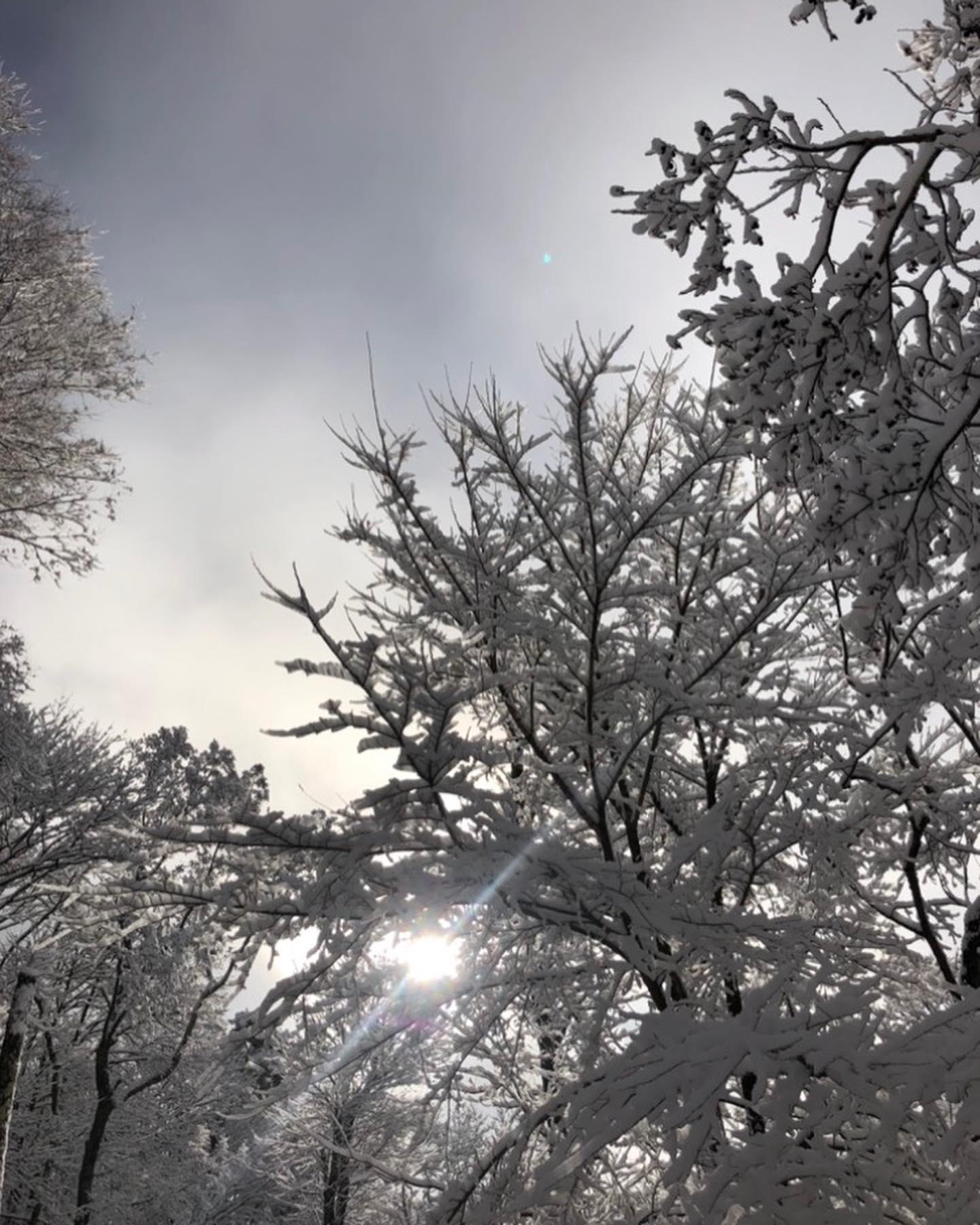 残り少ない冬を愉しむ。温暖化の影響で暖冬続きなここ八ヶ岳原村。日本海側北陸はまとまった雪が降って、ウインタースポーツはこの上ないパウダーを楽しめた今期の冬ですが、ここ八ヶ岳は寒さもまあまあな感じでした。思うのは、本当に温暖化なの?そもそもその年々によって毎度違っていて当たり前な気もする。ただ、今年の八ヶ岳は雪も少なく、割と暖かい冬でした。なのかもしれないです。その隙間で、出会う事のできるこの景色がとにかく最高。避暑地の八ヶ岳も良いですが、やはり冬の八ヶ岳は一瞬一瞬が張り詰めていて心地よい。まだまだ、だらだら?と桜の開花まで続く冬を楽しもうと思う。#八ヶ岳 #原村 #雪 #雪景色 #張り詰めた空気 #朝日 #冬の朝日 #高原 #薪 #薪ストーブ #冬の暮らし #ストーブハウス原村 #八ヶ岳の薪ストーブ専門店